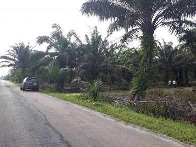 Parit Jabir Jalan Simpang Renggam Benut. 10 1/4 EKAR BEBAS