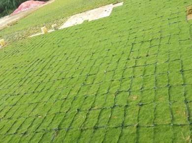 Bekal dan tanam rumput laman rumah