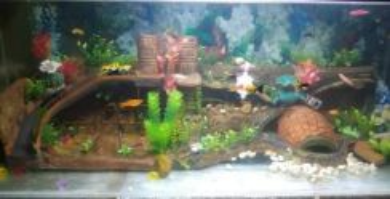 Hiasan dalaman Aquarium