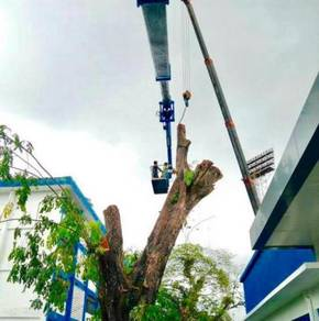 Khidmat Tebang,Trim,Potong Pokok Service Cut Tree