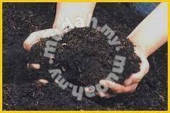 Sekam hitam pertanian atau fertigasi AA
