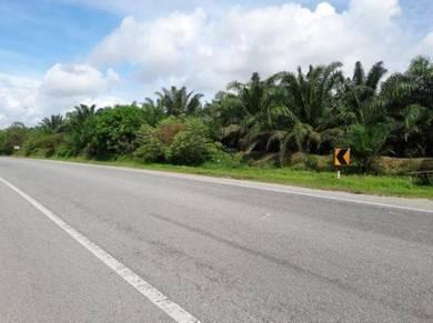 Oil palm plantation located between kulim hi-tech park & mbi project