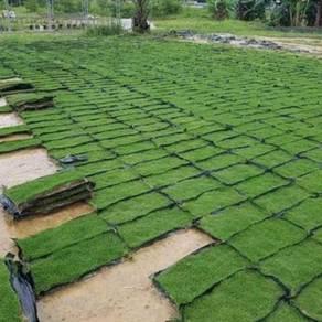 Tanam rumput dan lanskap