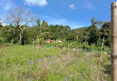 Kampung Cheringing, Janda Baik, Bentong