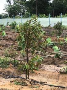 Dusun Teknologi Premium Durian Musang Kng &Duri Hitam, 3 Ac, Gemencheh