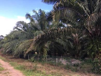 Agriculture Land For Sale Simpang Kerayong, Jasin, Melaka