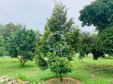 Pahang BENTONG Karak Durian Orchard sale